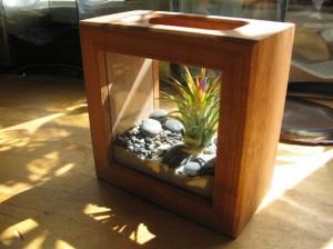 shadowbox terrarium