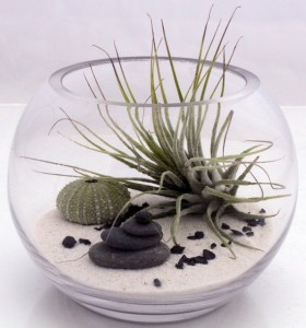 zen garden, terrarium kit, air plant