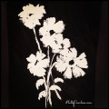 As-far-as-the-East-is-from-the-West-painting-blackandwhite-flower-flowers-paint-kellycaroline-ypsi-y