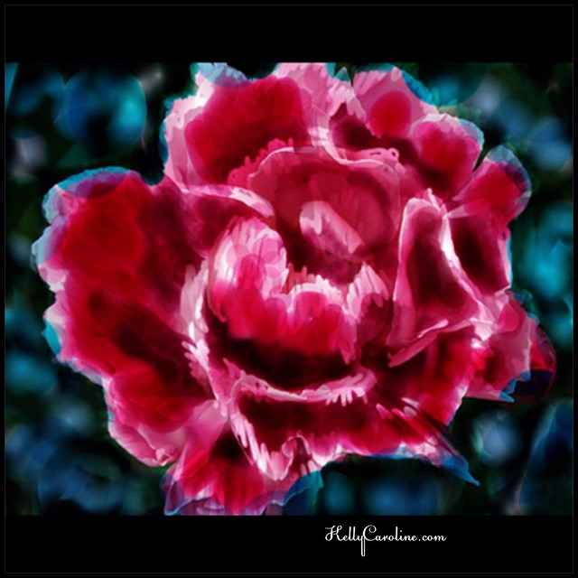 Some digital artwork today - i need peonies in the middle of winter #art #artist #artwork #peonies #flower #flowers #corel #painter #paint #digitalart #digital #design #designs #ypsi #ypsilanti #michigan #kellycaroline #leaves #watercolor #artwork @art_we_inspire #blue #winter #pink #red #growing #shading #painted #ink